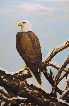 Bald Eagle watch by Anne Marie Spears