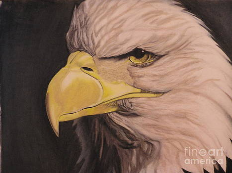 Bald Eagle by Wil Golden