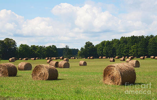 Bales of hay in field by Susan Montgomery