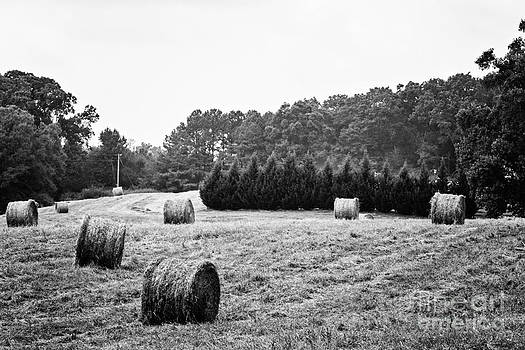 Bales of Hay  by Jinx Farmer