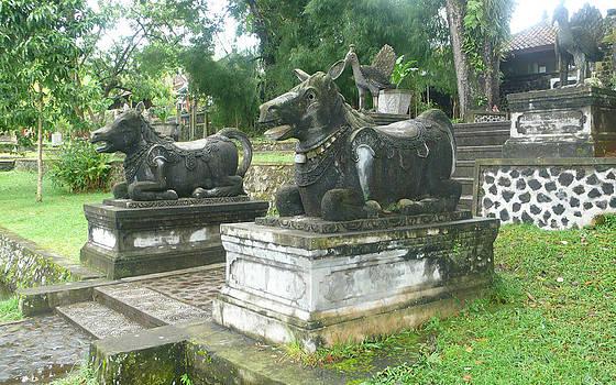 Bali Bulls by Jack Edson Adams