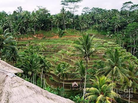 Bali rice fields by Crystal Beckmann