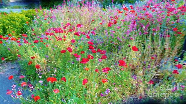 Ballerina Poppies by Sherry Stone