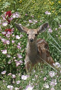 Bambi in the Summer Garden Il Closer by Jacquelyn Roberts