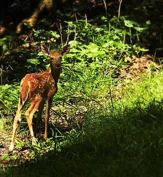 Bambi by Melissa Petrey