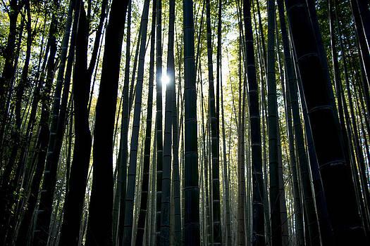 Bamboo Black by Marcio Correa