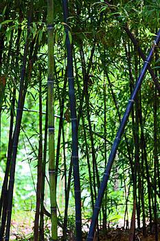 Carolyn Stagger Cokley - bamboo