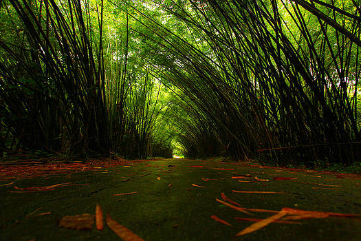 Bamboo Cathedral by Dexter Browne