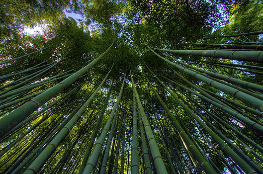 Matt Swinden - Bamboo Forest horizontal