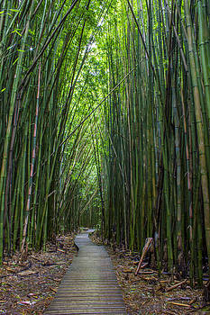 Bamboo Forest I by Carl Christensen