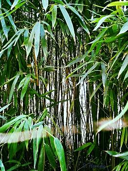 Bamboo Forest by Samantha Hornsby