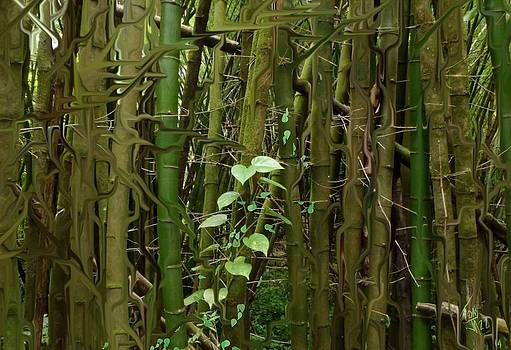 Bamboo Forest by Tony Rodriguez