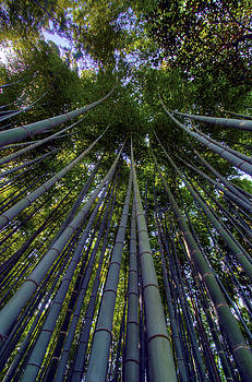 Matt Swinden - Bamboo Forest verticle