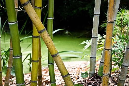 Bamboo Garden by  Tina McGinley