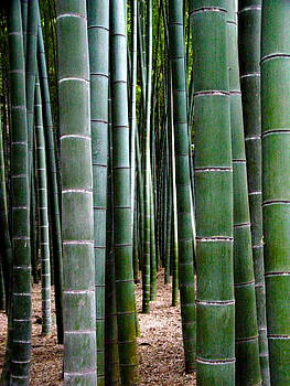 Larry Knipfing - Bamboo Grove 1