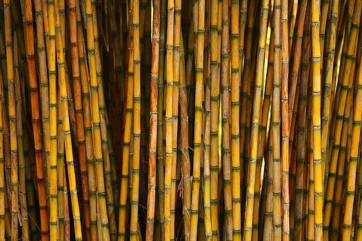 Bamboo by Jacqui Collett