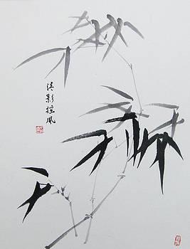 Bamboo by Jason Zhang