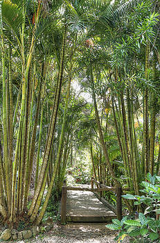 Bamboo Palm Walkway by Dave McGregor