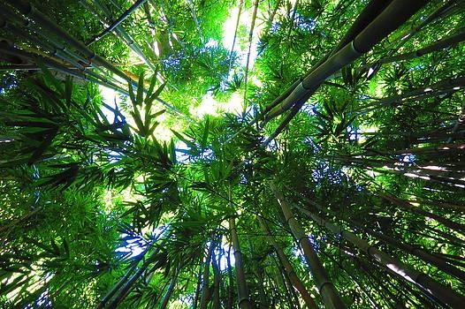 Bamboo Skies  by Melanie Beckler