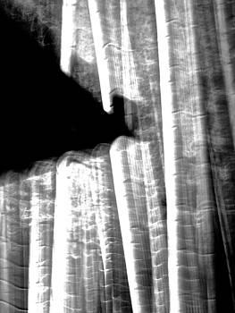 Larry Knipfing - Bamboo Spirit Dance - 11