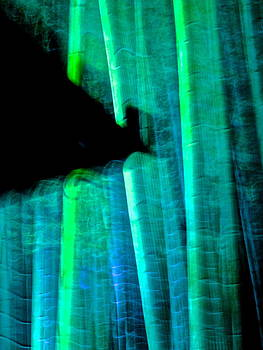 Larry Knipfing - Bamboo Spirit Dance - 9