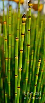 Tracey McQuain - Bamboo
