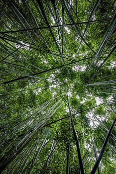 Bamboo Tree by Robert  Aycock
