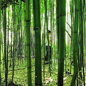 #bambooforest #magicalmoments #trees by Megan Rudman