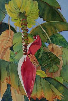 Banana Beginnings by Judy Mercer