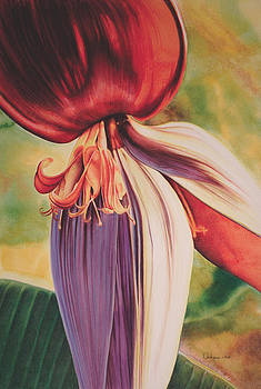 Banana Flower by Carlynne Hershberger
