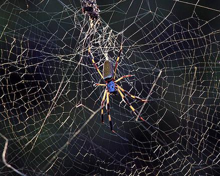 Suzie Banks - Banana Spider