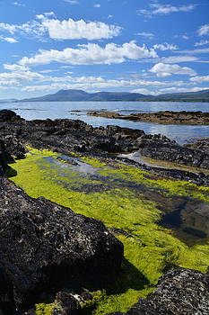 Bantry Bay in August by Phil Darby