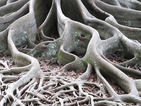 Banyan Roots by Alison Stein