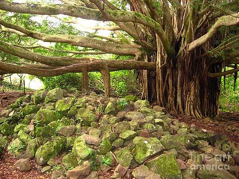 Christine Stack - Banyan Tree