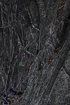 Banyon Tree Abstract by Sarah McKoy