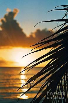 Barbados Sunset by David Gardener