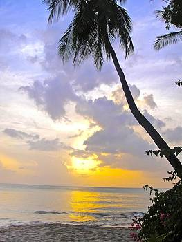 Jennifer Lamanca Kaufman - Barbados Sunset under the palm tree