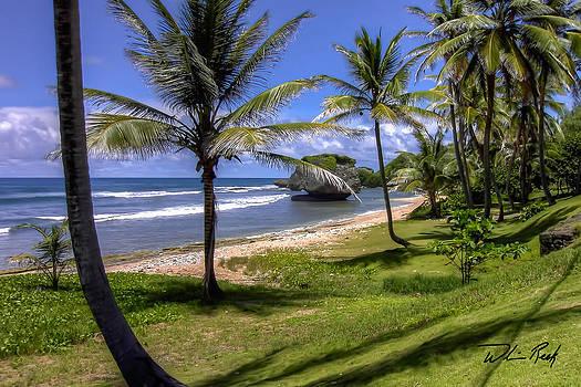 Barbados by William Reek