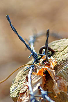 Barbed Wire and Fence Post by Judy Salcedo