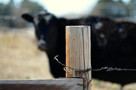 Barbed Wire Around by Clarice  Lakota