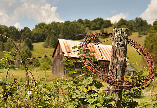 Barbed Wire Farm by Jeanne  Woods
