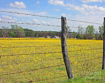 Barbed Wire Fence by Pam Carter