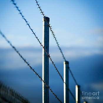 Tim Hester - Barbed Wire Fence
