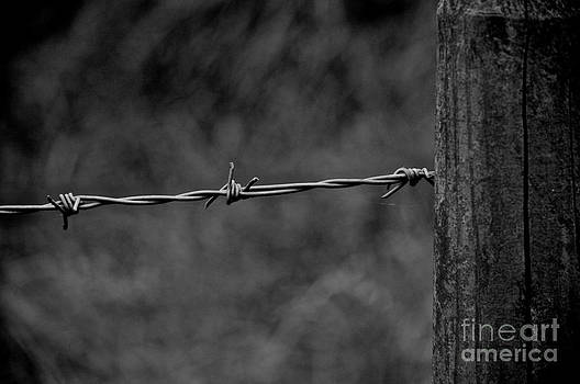 Barbed Wire by Kamgeek Photography