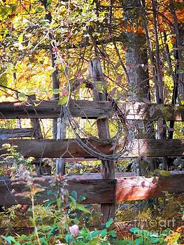Barbed Wire on Fence by Linda Marcille