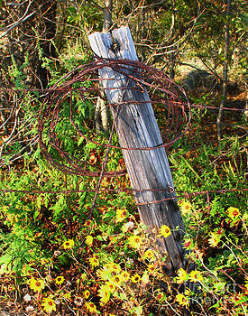 Barbed Wire by Pam Carter