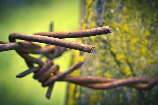 Priya Ghose - Barbed Wire