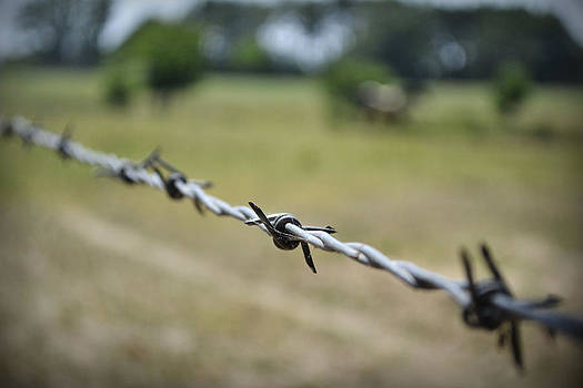 Barbed Wire by Richelle Munzon