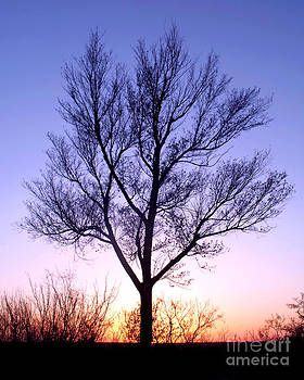 Douglas Taylor - BARE TREE AT SUNSET