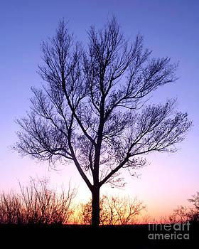 Douglas Taylor - BARE TREE AT SUNSET